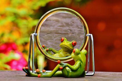frog-1499162_640